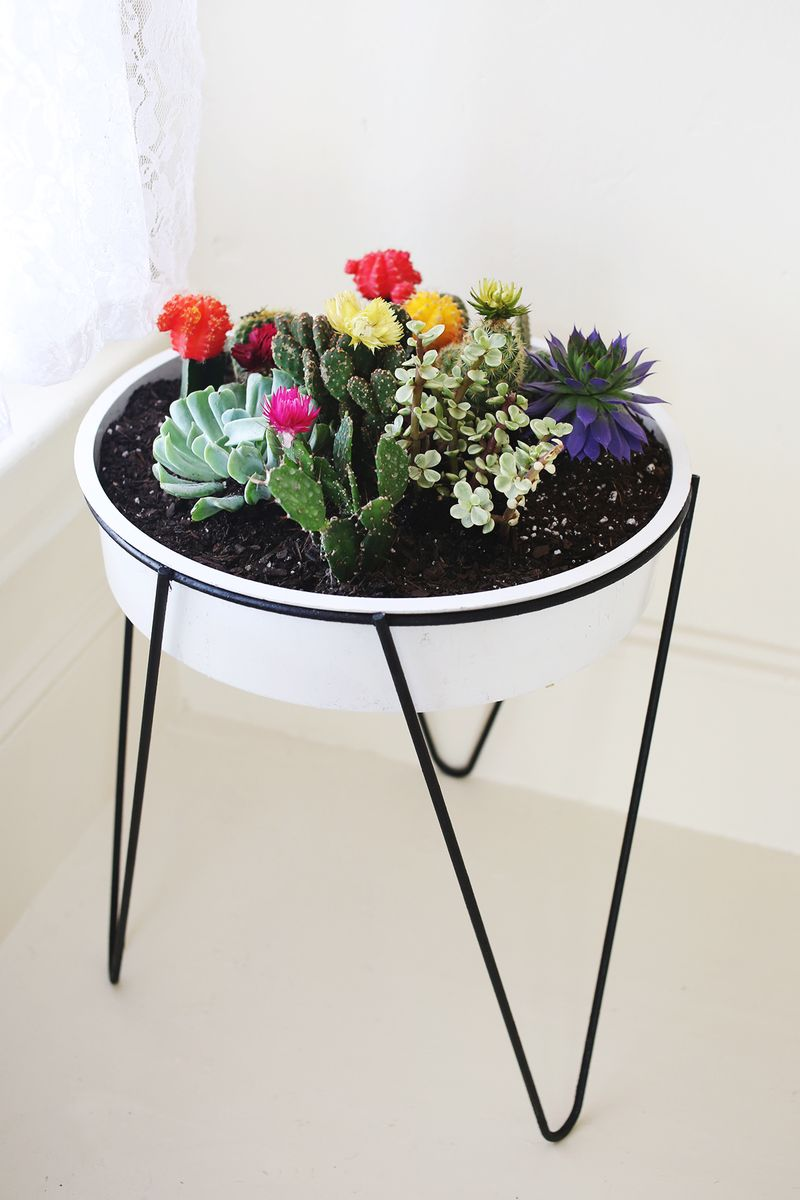 A Vintage Planter Cacti Garden via A Beautiful Mess