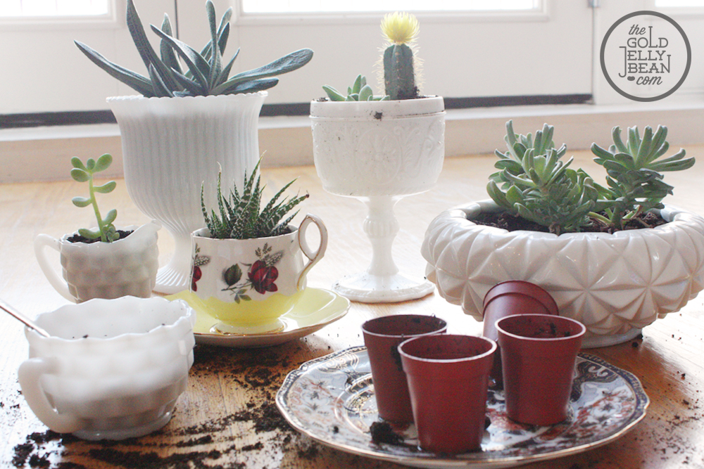 Planting Succulents In Tea Cups