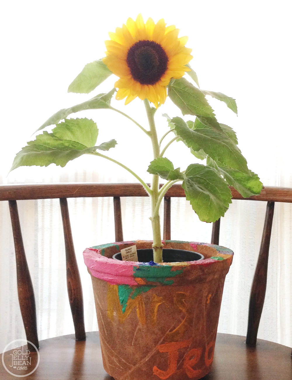 sunflower pot diy